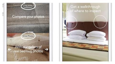 Bed Bug Proof pulgas en la cama