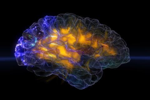 Glass Brain permite escanear el cerebro y visualizar en tiempo real y en tres dimensiones la actividad cerebral