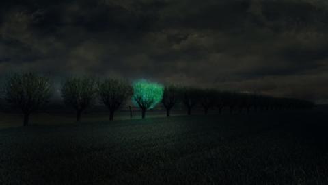 Arboles fluorescentes iluminarían las carreteras del futuro