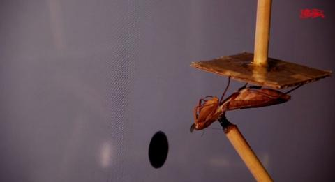 Gafas 3D para insectos