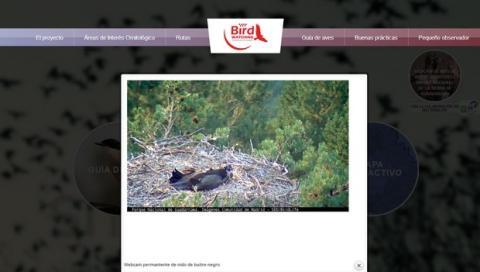 Webcam permanente nido de buitre negro