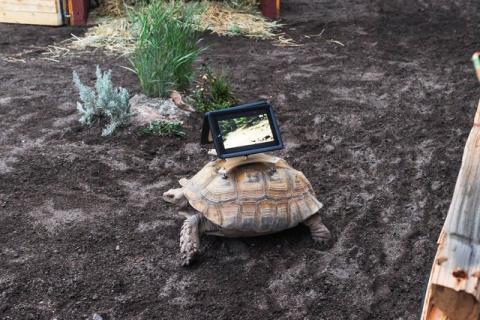 Tortugas museo Ipads