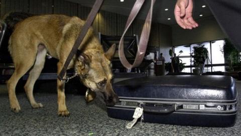 La policía de Nueva York entrena perros para detectar memorias USB y tarjetas de memoria ocultas.