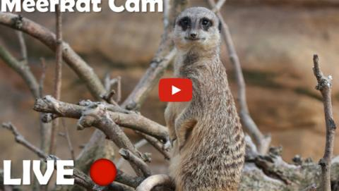 Youtube emite en streaming a los animales del Zoo de Londres