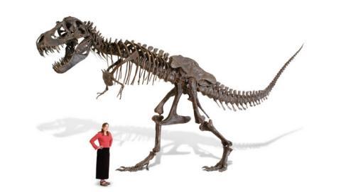 Ya puedes pedir a los Reyes un Tyrannosaurus Rex... de tamaño real