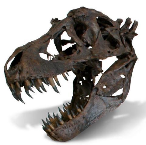 T-Rex a tamaño real