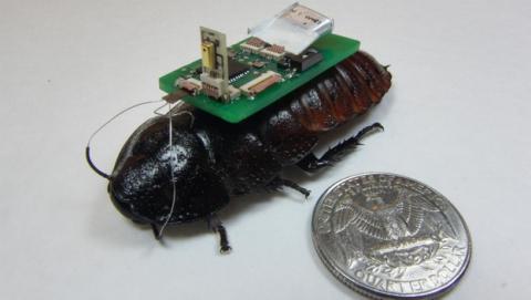 Cucarachas ciborg o biobots equipadas con un chip ayudarán a víctimas de terremotos.