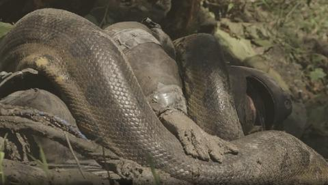 Hombre devorado por una anaconda en el documental Eaten Alive de Discovery Channel. (vídeo)