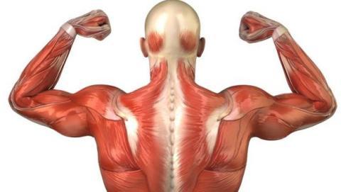 músculo artificial contraer
