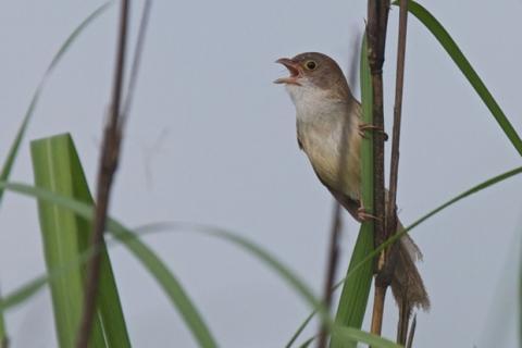 Descubren pájaro extinguido hace 74 años