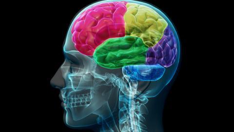 cerebro olvida para recordar