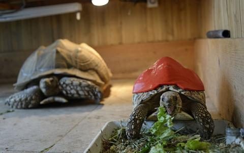 Concha de tortuga con impresora 3D