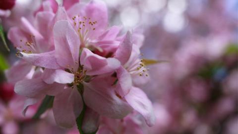 primavera sangre altera