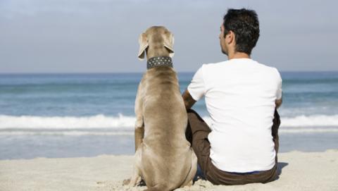 Los perros detectan el cáncer en los seres humanos