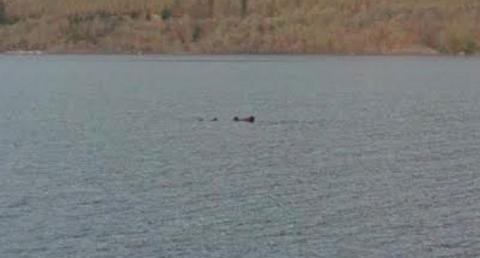 Monstruo del lago Ness Google Maps