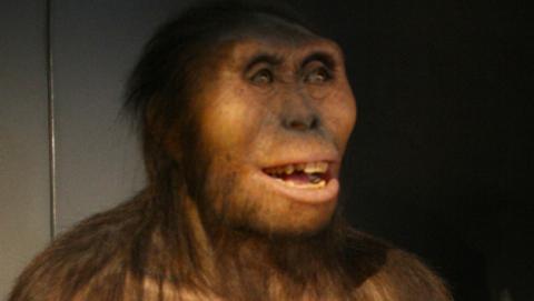 australopitecus antiguo