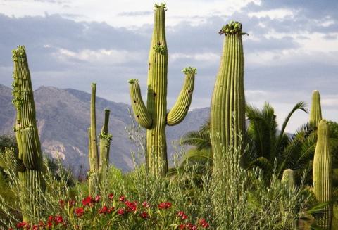 Cámaras de tráfico en cactus