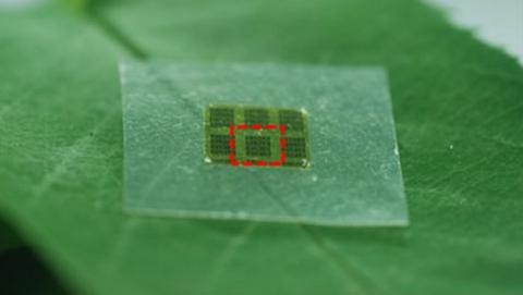 Llegan los chips de celulosa biodegradables que no contaminan y funcionan como fertilizante.