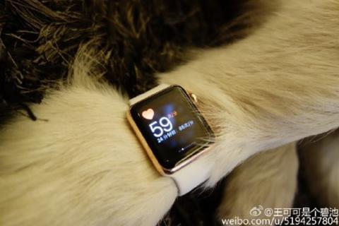 Perro con Apple Watch de oro