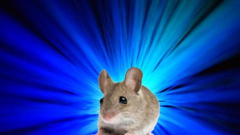 luz azul ratón
