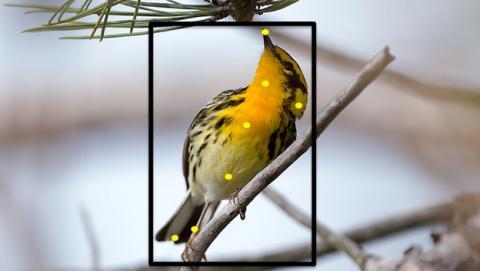 Merlin Bird Photo ID identifica los pájaros que hay en tus fotos.