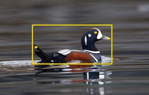 Web para identificar pájaros