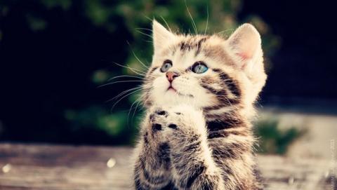 Científicos demuestran que ver vídeos de gatos reduce el estrés.