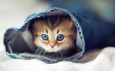 Vídeos de gatos reducen el estrés y aumentan la felicidad