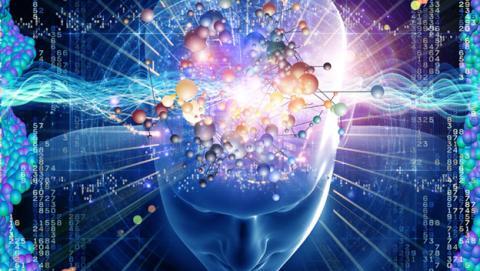conectan cerebro ratas monos