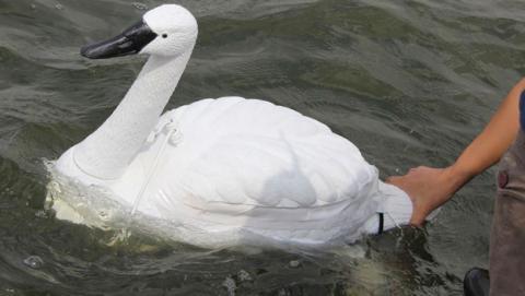 Los cisnes robóticos o NUSwan diseñados para medir la calidad del agua
