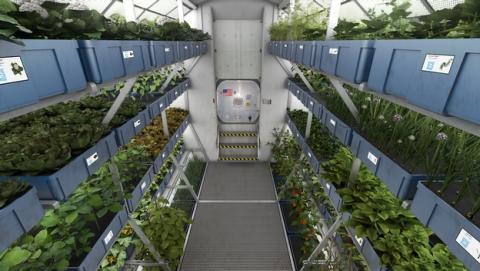 Astronautas de la NASA comen la primera lechuga cultivada en el espacio.