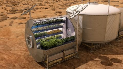Primera lechuga de la NASA cultivada en el espacio