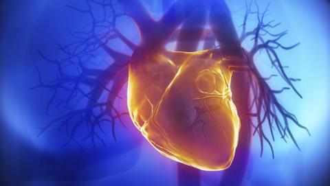 Científica española descubre cómo rejuvenecer el corazón