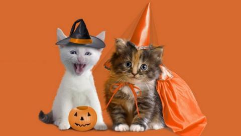 Las mejores tiendas de disfraces de Halloween baratos