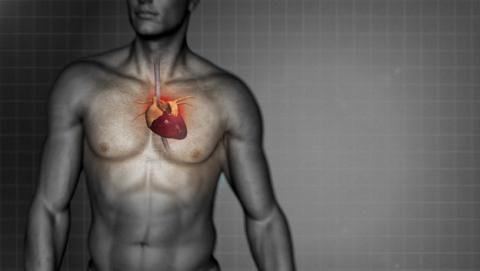 Descubren células que pueden reparar las arterias dañadas
