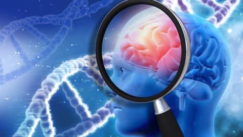 Descubren una molécula que borra la proteína del Alzheimer