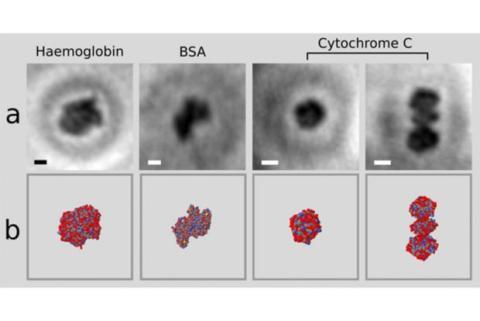 Fotos de proteínas gracias al grafeno
