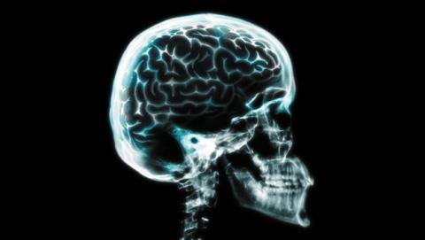Capacidad de memoria del cerebro