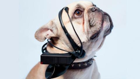 Traductor de ladridos de perro