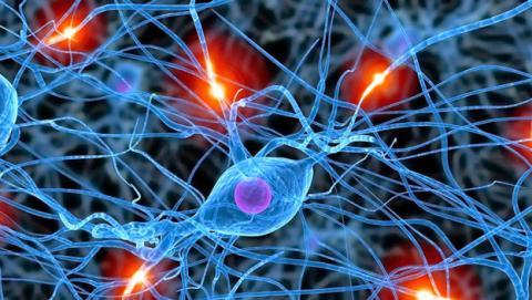 Descubren que existen 50 tipos de neuronas inhibitorias en el cerebro. Es un importante avance en la investigación médica