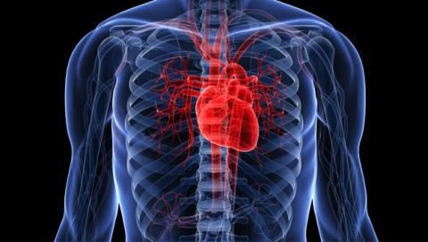 Regenerar órganos humanos, un paso más cerca