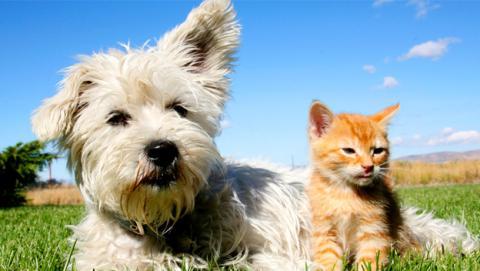Los mejores juegos de inteligencia para perros y gatos