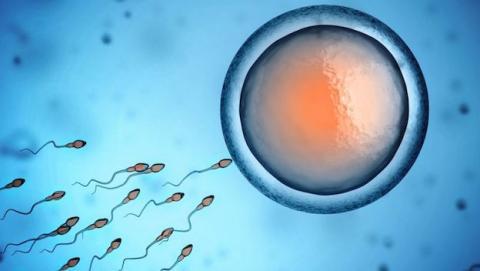 Nuevo control de natalidad masculina?