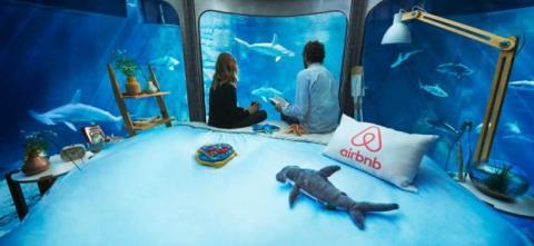 Dormir una noche en un acuario de tiburones