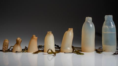 Botellas de agua biodegradables a base de alga