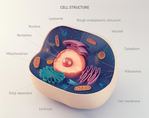 Estructura de una célula