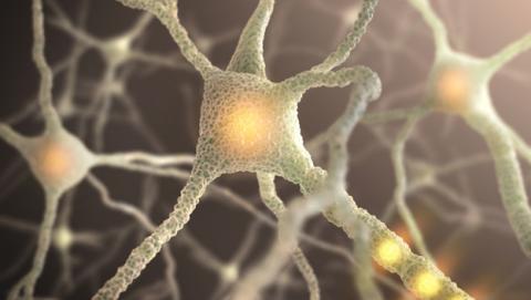 Dormir y concentrarse, claves del funcionamiento del cerebro