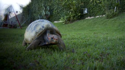 Salvan a una tortuga con un caparazón impreso en 3D
