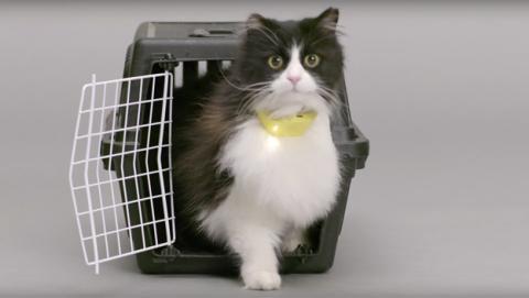 Catterbox, el collar que traduce los maullidos de tu gato