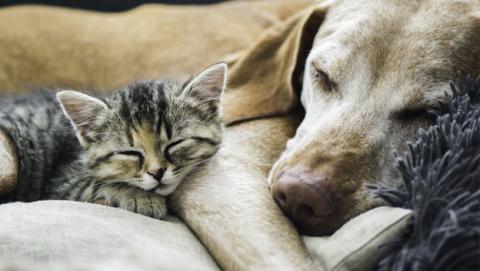 Los 5 mejores collares GPS para encontrar a tu perro o gato